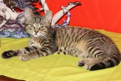 Kalinka, chat Gouttière