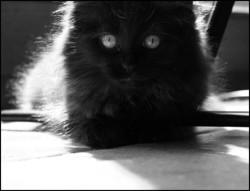 Kallie, chat Gouttière