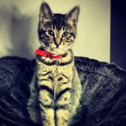 Kalvin, chat Gouttière