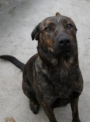 Kana Bella, chien