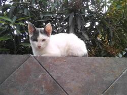 Kanel, chat Gouttière