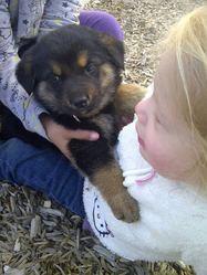 Kanelle, chien Terre-Neuve