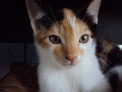 Kanelle, chat Gouttière