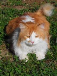 Kapy, chat Gouttière