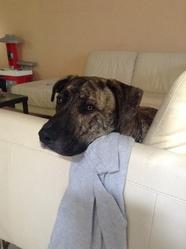 Kartel, chien