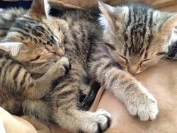 Kat Et Mia, chat