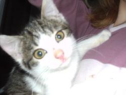 Katlyne, chat