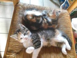Katty, chat Gouttière