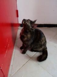 Katty, chat