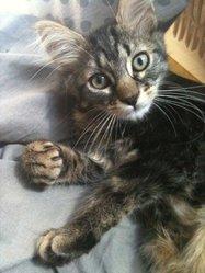 Kawa, chat Gouttière