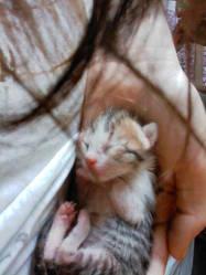 Kawai, chat Gouttière