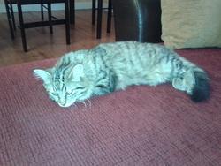 Kawete, chat