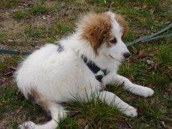 Kawick, chien