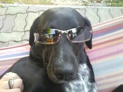 Kaya, chien Dalmatien