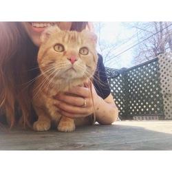 Kayamba, chat Gouttière