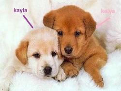 Kayla Et Kelya, chien Golden Retriever