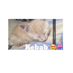 Kebab, chat