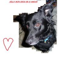 Kelly, chien Border Collie