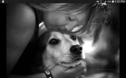 Kelly, chien Husky sibérien