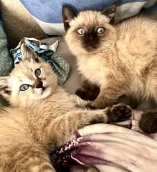 Kelly, chat Gouttière