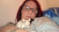 Kelsee, rongeur Rat
