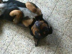 Kenny, chien
