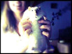 Kensei, rongeur Rat