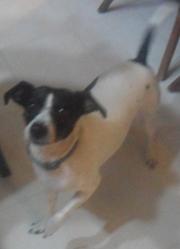 Kenza, chien