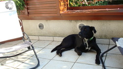 Kenzo, chien