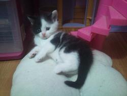 Kenzo, chat Gouttière
