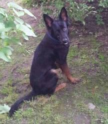 Keona, chien