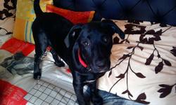 Ketty, chien