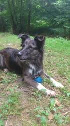 Ketty, chien Border Collie