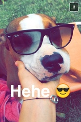 Keyta, chien American Staffordshire Terrier