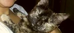 Khaleesi, chat Européen