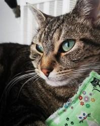 Khino, chat Gouttière