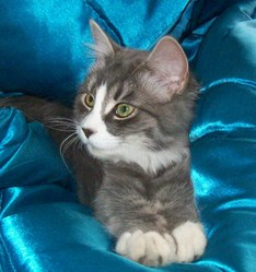 Kia, chat Gouttière
