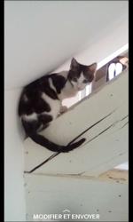 Kiani, chaton