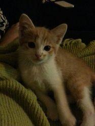 Kiara Au Paradis, chat Gouttière