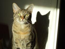 Kiara, chat Gouttière
