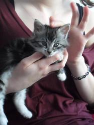 Kichou, chat Gouttière