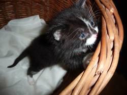 Kikat, chat Gouttière