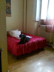 Kiki, chien Caniche