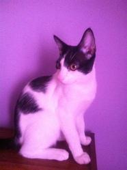 Kiki, chat