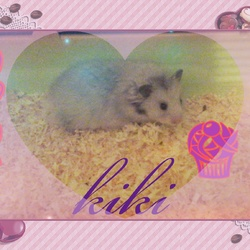 Kiki, rongeur Hamster