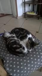 Kiki Et Mimi, chat