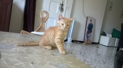 Kiko, chat Gouttière