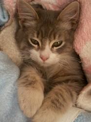 Kikou, chat Gouttière