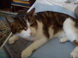 Kili, chat Gouttière