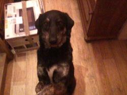 Kim, chien Border Collie